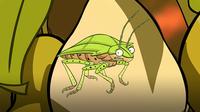 I'm a Stink Bug