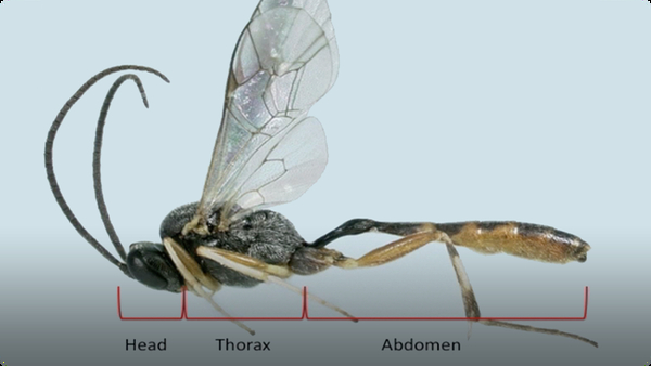 All About Insects!