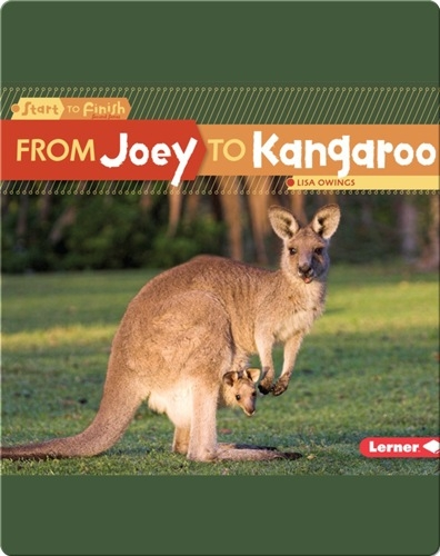 From Joey to Kangaroo