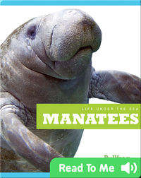 Life Under The Sea: Manatees