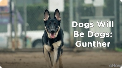 Gunther | Dogs Will Be Dogs