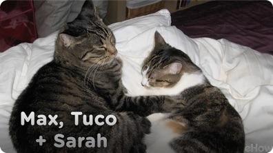 Max, Tuco, and Sarah   Warm & Fuzzy: My Cat Story