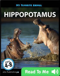 My Favorite Animal: Hippopotamus