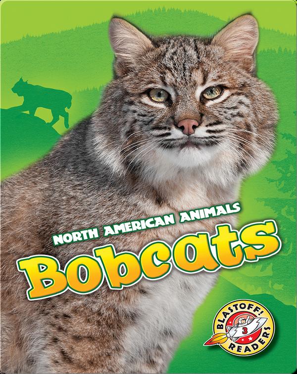 Cool Cats: Bobcats