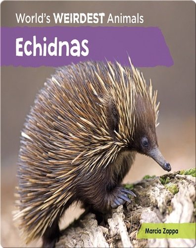 Echidnas