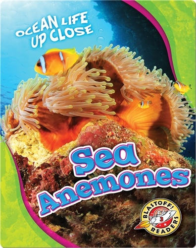 Ocean Life Up Close: Sea Anemones