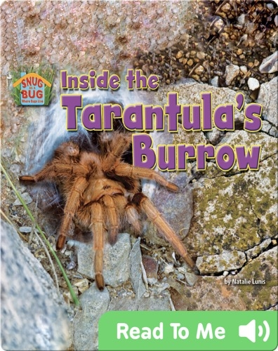 Inside the Tarantula's Burrow