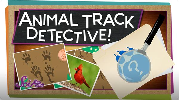 SciShow Kids: Animal Track Detective!
