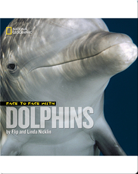Face to Face with Dolphins