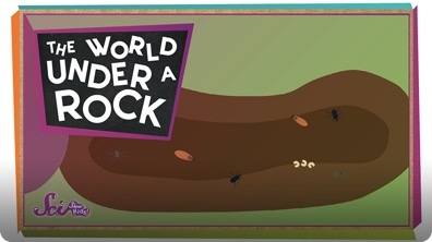 SciShow Kids: The World Under a Rock!