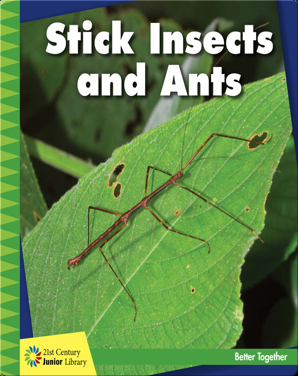 Stick Insects and Ants