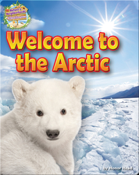 Welcome to the Arctic