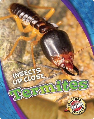 Insects Up Close: Termites