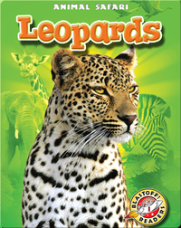 Leopards: Animal Safari