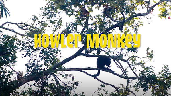 Gabby Wild and The Howler Monkeys