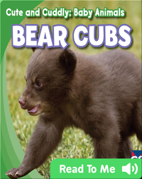 Cute and Cuddly: Bear Cubs