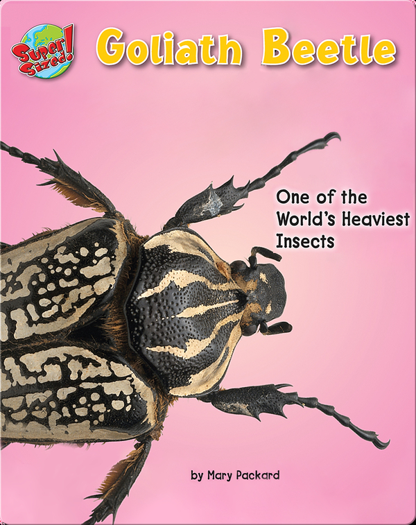 Goliath Beetle: One of the World's Heaviest Insects