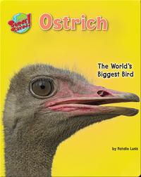 Ostrich: The World's Biggest Bird
