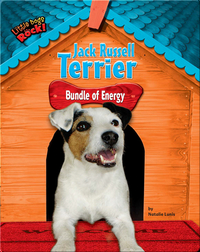 Jack Russell Terrier: Bundle of Energy