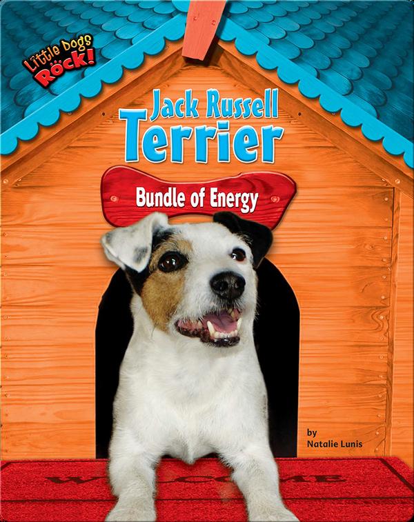 Jack Russell Terrier: Bundle of Energy