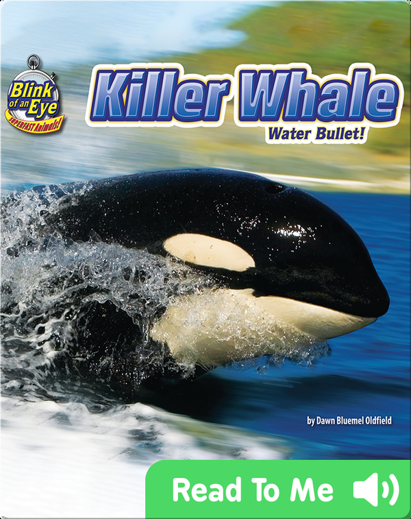 Killer Whale: Water Bullet!