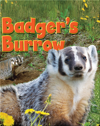 Badger's Burrow