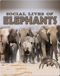 Social Lives of Elephants