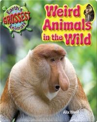 Weird Animals in the Wild