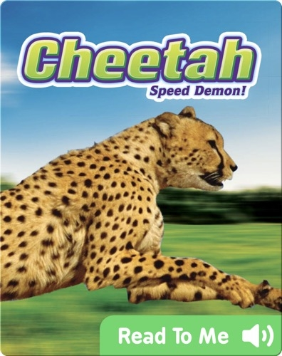 Cheetah: Speed Demon!