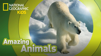 Amazing Animals: Polar Bear