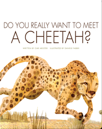 Do You Really Want To Meet A Cheetah