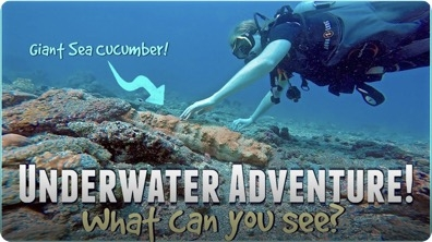 Underwater Adventure! What can YOU See?