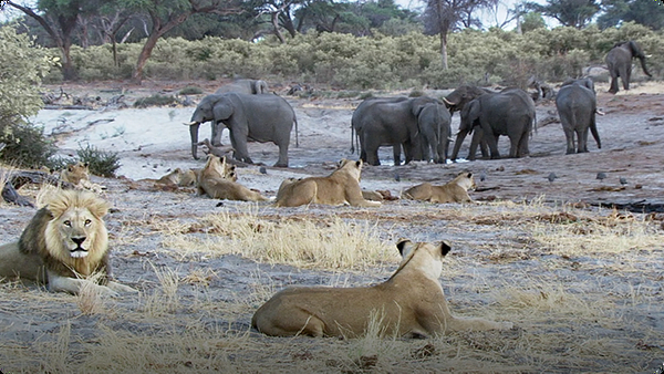 Water Reserve Competition for Elephants