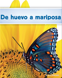 De huevo a mariposa