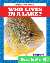 Who Lives in a Lake?