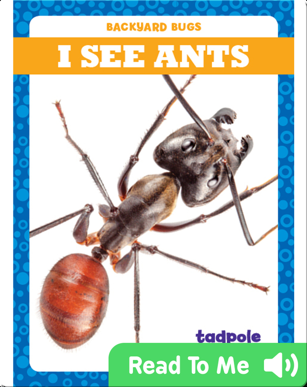 I See Ants