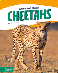 Animals of Africa: Cheetahs