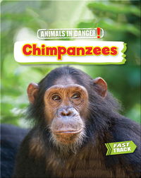Animals in Danger: Chimpanzees