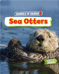 Animals in Danger: Sea Otters