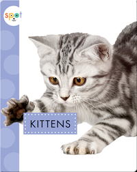 Baby Farm Animals: Kittens