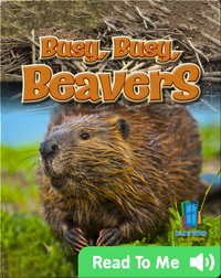 Busy, Busy, Beavers
