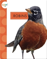 Backyard Animals: Robins
