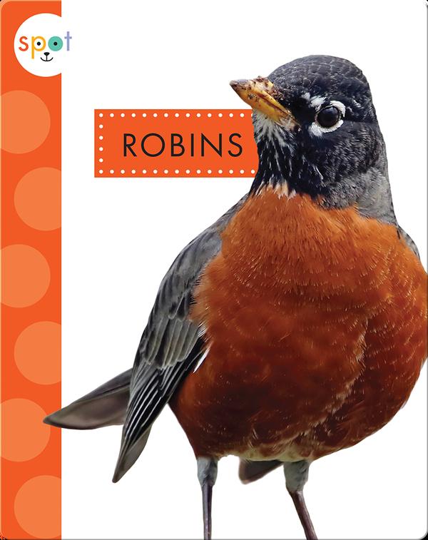 Backyard Animals: Robins
