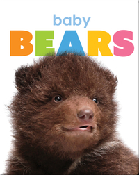 Starting Out: Baby Bears