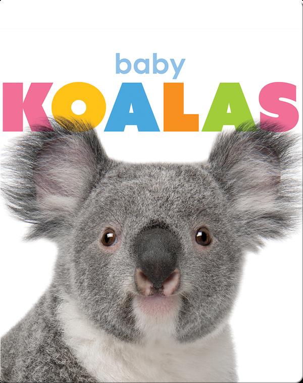 Starting Out: Baby Koalas