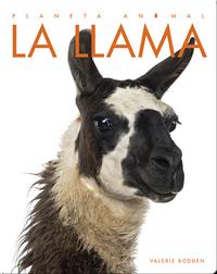 Planeta Animal: La Llama