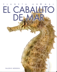 Planeta Animal: El Caballito de Mar