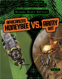 Africanized Honeybee vs. Army Ant