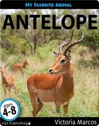 My Favorite Animal: Antelope