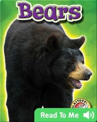 Bears: Backyard Wildlife